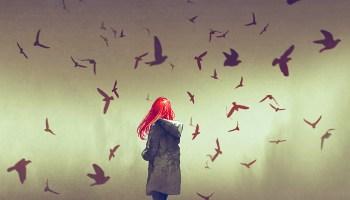 birdsDarkness