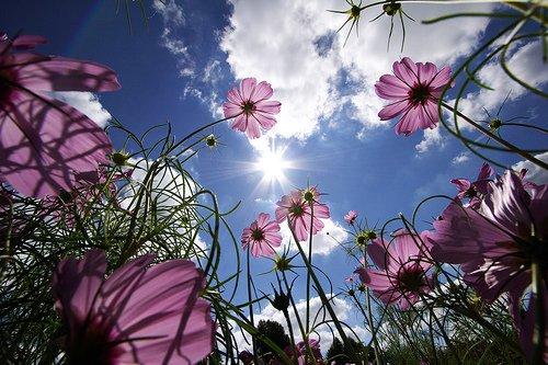 flowersinthesky